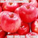 (送料無料 りんご リンゴ 北海道産)昂林 こうりん 5kg 18玉前後(JA北海道 余市産 収穫日に空輸で翌日着!秋リンゴ 最高級 秀品 北海道ブランド)