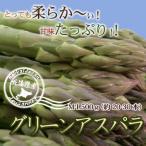 ミツハシ厳選 北海道グリーンアスパラM-L 500g 送料無料 沖縄は送料別途加算 セール
