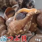 天然 活 真つぶ 真ツブ マツブ 1kg前後 5-10個前後 送料無料 沖縄は送料別途加算