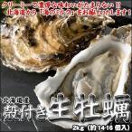 牡蠣 殻付 カキ かき 北海道産 生食可 4kg(約36-44個入) 送料無料 ※沖縄は送料別途加算