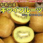 和歌山産 キウイフルーツ 2.5kg 送料無料 ※北海道、沖縄・離島は送料別途加算
