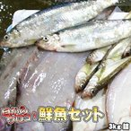 鮮魚セット 居酒屋 業務用 北海道産 3kg 送料無料 沖縄送料別途加算