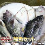 鮮魚セット 業務用 居酒屋 送料無料 北海道産 5kg 沖縄送料別途加算