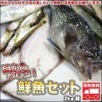 鮮魚セット 2kg 業務用 居酒屋 送料無料 北海道産 沖縄送料別途加算