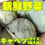 新鮮野菜 バイキング キャベツ Lサイズ 8玉入8kg 送料無料 沖縄は送料別途加算