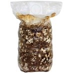 お子様の食育や自由研究、贈り物に最適なシイタケ栽培キット