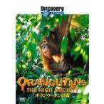 ディスカバリーチャンネル オランウータンの森(DVD)