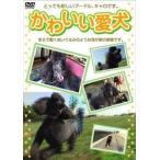 Yahoo!ぐるぐる王国DS ヤフー店かわいい愛犬(DVD)