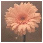 花は咲くプロジェクト / NHK 明日へ 東日本大震災復興支援ソング: 花は咲く(初回限定盤/CD+DVD) [CD]画像