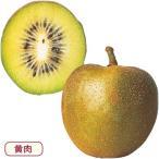 キウイフルーツ センセーションアップル 接木苗 1本