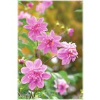 e-flower_184205