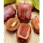ミニキウイフルーツ 紫香 接木苗