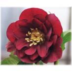 e-flower_490261