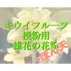 キウイフルーツ用人工授粉 花粉、ぼん天セット 1セット