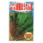 アタリヤ サラダで食べる赤茎ほうれん草 1P