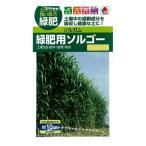 タキイ種苗 緑肥・景観用 ソルガム 緑肥用ソルゴー M