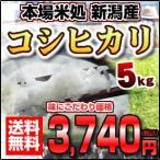新潟県産こしひかり コシヒカリ 5キロ おいしいお米