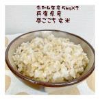 玄米 夢ごこち 10kg 兵庫県産