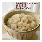 玄米食 1回分 ポイント消化 初めての玄米 食べやすい玄米 玄米ごはん 白米と混合炊き レシピ付き ミルキークイーン 兵庫県産 令和元年産