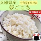特別栽培米 玄米 夢ごこち 5kg