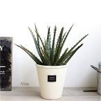 アロエ H23 多肉植物 造花 インテリア CT触媒 観葉植物 フェイクグリーン