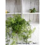 ミニ観葉植物 グリーンハンギング・ファーン (シダ)4209 造花 壁掛 造花 フェイクグリーン CT触媒