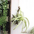 フェイクグリーン エアプランツハンギング C-type ティランジア 観葉植物 造花 インテリア CT触媒