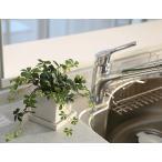 シサスアイビー シュガーバインプラント 四角鉢皿付 造花 観葉植物 インテリア フェイクグリーン