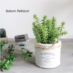 多肉植物 セダム パリダム H15 テラコッタ 造花 インテリア CT触媒 観葉植物 フェイクグリーン