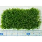 プレミアムグリーンモス(横6×縦3cmマット(2枚に別れることもあります)) 無農薬 前景草 品質抜群の有名ファーム産