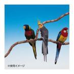 ファープラスト 鳥用組立て式止まり木 フレックス 4192 79PCS 84192799