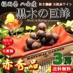 葡萄 巨峰 ご当地 ブランド 果物 通販 送料無料 黒木の巨峰 福岡 八女産 赤秀品 3房