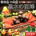 葡萄 巨峰 ご当地 ブランド 果物 通販 送料無料 黒木の巨峰 福岡 八女産 赤秀品 4房