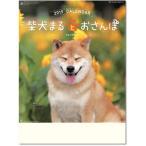 カレンダー 2019 壁掛け 柴犬まるとおさんぽカレンダー