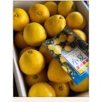 小夏 高知県産 人気の土佐小夏 日向夏 Lサイズ 約5kg 初夏の涼味 贈答品 ご家庭