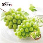 やまや シャインマスカット(種なし) 約1kg(送料無料 産地直送 ぶどう 葡萄 季節 果物 フルーツ お取り寄せ)