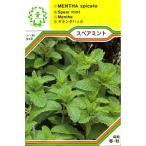 【DM便可】ハーブ・西洋野菜の種 「スペアミント」