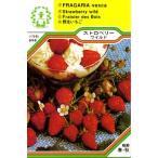 【DM便可】ハーブ・西洋野菜の種 「ストロベリー ワイルド」