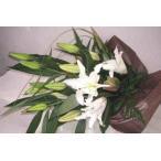 カサブランカ・ユリの花束・ホワイトデーギフト