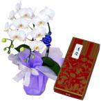 鳩居堂のお線香 清靄 紙箱 バラ詰 約100g 14cm