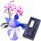 ミディ胡蝶蘭 お供え 花 線香セット 2本立 ランラン ピンク色 鳩居堂 真如 バラ詰め ギフト