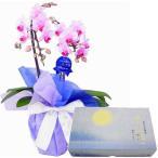 胡蝶蘭 お供え 花 線香セット 2本立 ミディ ピンク色 丸叶むらた 月の想い お月さま線香 大バラ ギフト