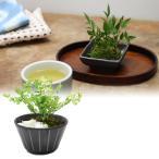 プリザーブドグリーン インテリアグリーン 観葉植物 盆栽 ミニ プリザーブドフラワー KOBON アジアンタム モス キャンセル不可