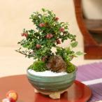 敬老の日 盆栽「手のひらの上のちいさな秋」