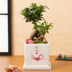 敬老の日 鉢植え「賀寿丸」