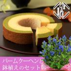 敬老の日 鉢植えセット「茶匠井六園  京の抹茶バームクーヘン(2層)」