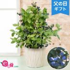 父の日 花 ギフト 鉢植え 実付きブルーベリー〜収穫が待ちどおしい〜 5号 プレゼント 2021