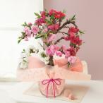 花 桃 ギフト 鉢植え 南京桃〜艶やかな3色咲き分け〜 花鉢 フラワーギフト プレゼント