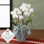 胡蝶蘭 ギフト 鉢植え「長寿を祝う胡蝶蘭〜白絹〜」 プレゼント お祝い 誕生日 花