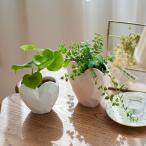観葉植物「ハートフィロデンドロン&ミリオンハート」 おしゃれ 引っ越し祝い 友達 プレゼント ギフト インテリア